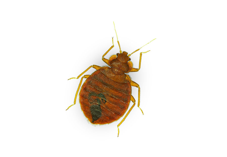 Bed Bugs In Nyc Stores